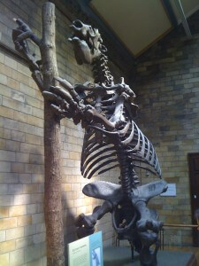 Giant prehistoric sloth at the Natural History Museum