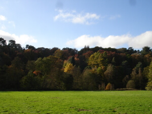 Winkworth Aboretum in autumn from the meadow