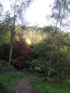 Winkworth Arboretum in autumn