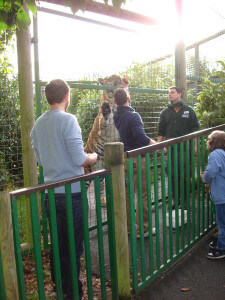 Feeding the tigers at Paradise Wildlife Park