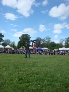Falconry at Morden Hall Park Country Show